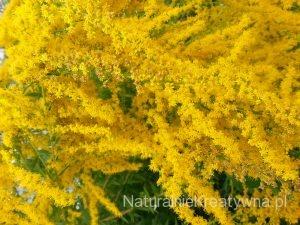 naturalny kosmetyki naturalne biokosmetyki ekokosmetyki naturalnie kreatywna